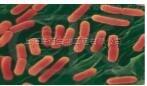 细菌RNAOUT