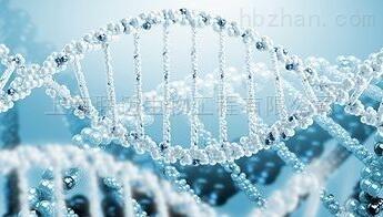 天净沙单细胞RNA扩增试剂盒