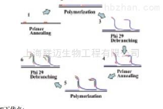 通用型全基因组扩增试剂盒