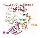 KOD DNA聚合酶