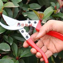 苹果树枝剪花枝剪新鲜花粗枝剪