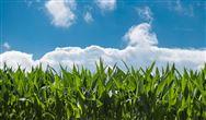 《株洲市农村人居环境整治三年行动实施方案2018-2020》