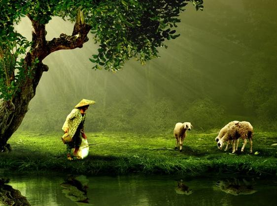 曲久辉:农村水环境综合治理的标准与模式